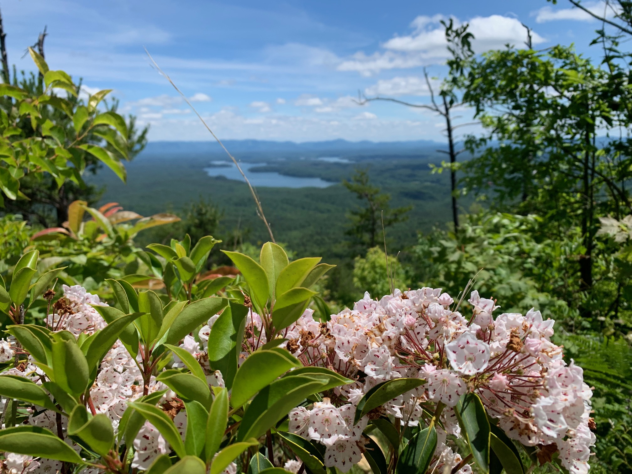 Lake James in the distance framed by trees and rhododendrens